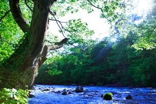 ケヤキの大木と清流の写真素材 [FYI01507960]