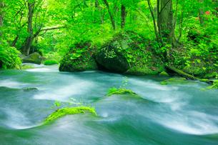 新緑と清流の写真素材 [FYI01507965]