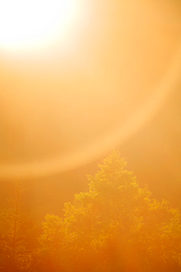 樹林と朝の光芒の写真素材 [FYI01507985]
