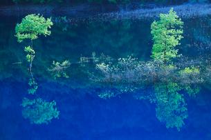 新緑の木立と宝仙湖の写真素材 [FYI01508000]
