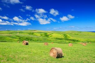 牧草ロールの写真素材 [FYI01508028]