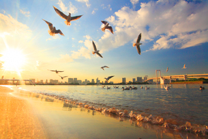 ユリカモメとレインボーブリッジと夕日と波の写真素材 [FYI01508065]