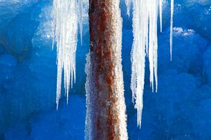 つららと凍り付いた松の幹の写真素材 [FYI01508091]