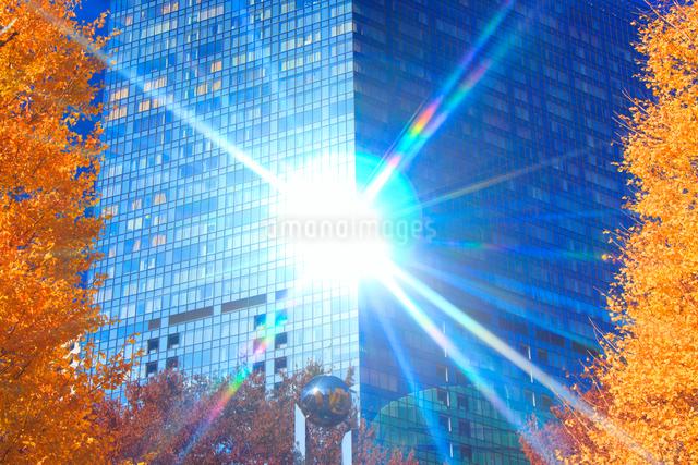 イチョウの紅葉と輝くビルの写真素材 [FYI01508146]