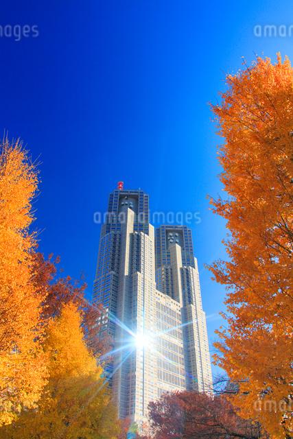 イチョウの紅葉と輝く東京都庁の写真素材 [FYI01508305]