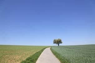 pear tree, fields, road, near Heilbronn, Baden-Wuerttembergの写真素材 [FYI01508343]