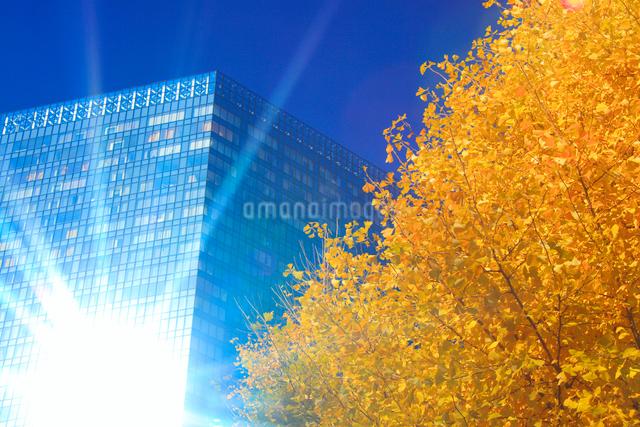 イチョウの紅葉と輝くビルの写真素材 [FYI01508394]