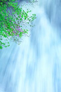 ツツジと竜頭滝の写真素材 [FYI01508483]