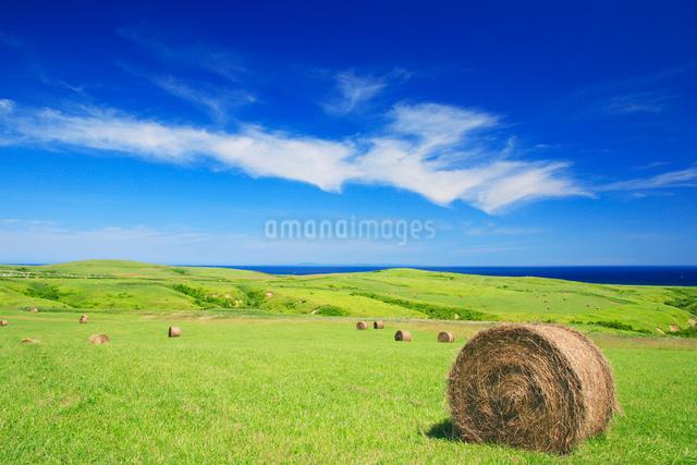牧草ロールと海の写真素材 [FYI01508527]