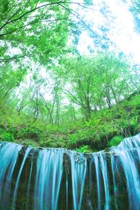 滝状の岩清水と新緑の樹林の写真素材 [FYI01508585]