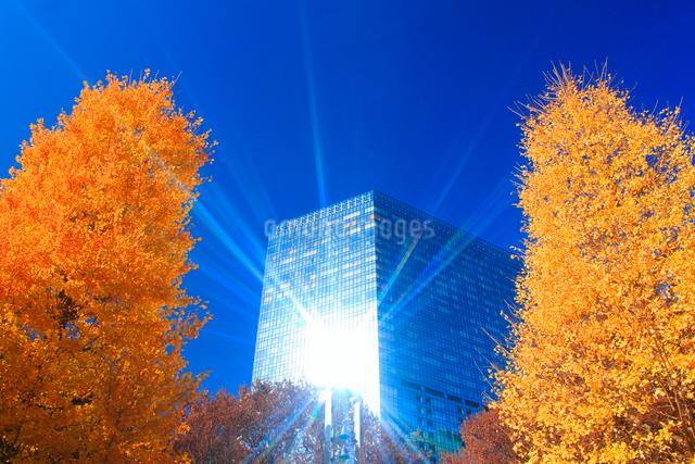 イチョウの紅葉と輝くビルの写真素材 [FYI01508694]
