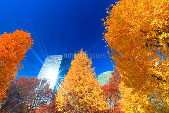 イチョウの紅葉と輝くビルの写真素材 [FYI01508698]
