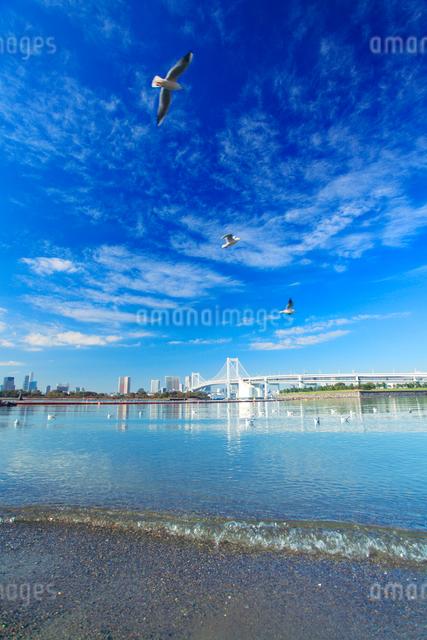 ユリカモメとレインボーブリッジと海の写真素材 [FYI01508707]
