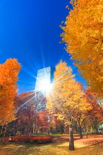 イチョウの紅葉と輝くビルの写真素材 [FYI01508767]