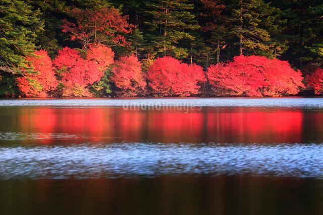 ドウダンツツジなどの紅葉の樹林とさざ波立つ水面の写真素材 [FYI01508951]