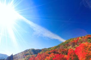 紅葉のモミジなどの樹林と秋空と太陽の光芒の写真素材 [FYI01509150]