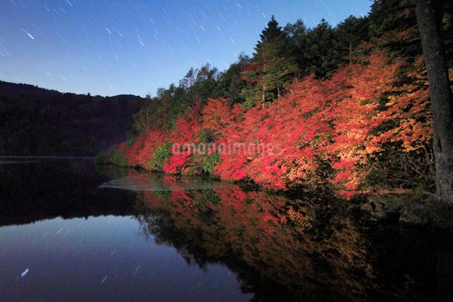 水鏡のドウダンツツジなどの紅葉の樹林と星空の写真素材 [FYI01509246]