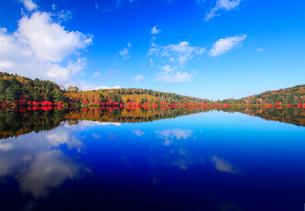 水鏡のドウダンツツジなどの紅葉の樹林の写真素材 [FYI01509273]