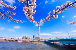 ソメイヨシノと東京スカイツリーと隅田川と屋形船と言問橋の写真素材 [FYI01509403]