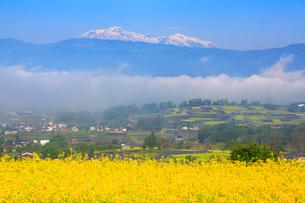 福島の棚田から望む朝霧の雲海と菜の花公園と妙高山の写真素材 [FYI01509444]