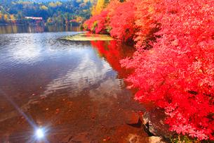 ドウダンツツジの紅葉と輝く水面の写真素材 [FYI01509493]