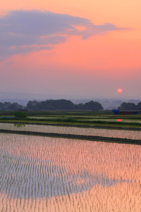 田植え直後の田園と朝日の写真素材 [FYI01509498]