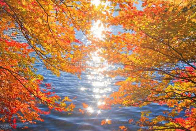 ドウダンツツジの紅葉と輝く水面の写真素材 [FYI01509558]