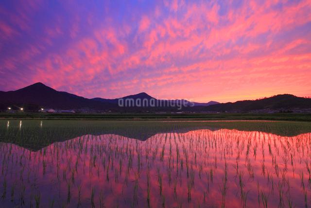 水鏡の田園と夫神岳と女神岳と夕焼けの写真素材 [FYI01509604]