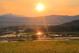 福島の棚田から望む菜の花公園と妙高山と夕日の写真素材 [FYI01509652]