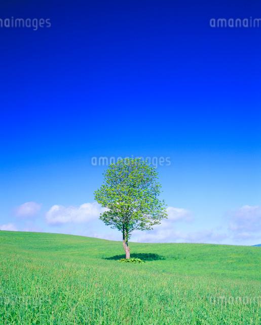 牧草地と木立の写真素材 [FYI01509728]
