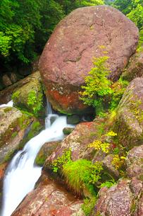 白谷川の岩清水の写真素材 [FYI01509740]