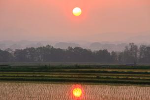 田植え直後の田園と朝日の写真素材 [FYI01509803]
