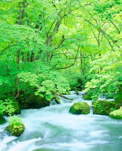新緑の奥入瀬渓流の写真素材 [FYI01509827]