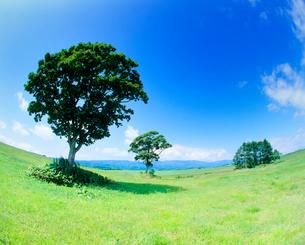 牧草地と木立の写真素材 [FYI01509851]