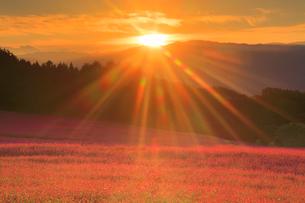 花咲く赤そば畑と朝日の光芒と八ケ岳連峰の写真素材 [FYI01509872]