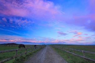 牧場の道と馬と朝焼けの写真素材 [FYI01509897]