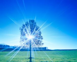 牧草地と木立と朝の木もれ日の光芒の写真素材 [FYI01509981]