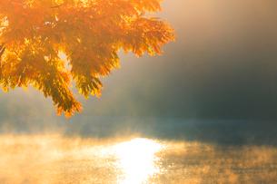 黄金アカシアの紅葉と朝霧の聖湖の写真素材 [FYI01510042]