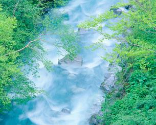 新緑の美瑛川の写真素材 [FYI01510055]