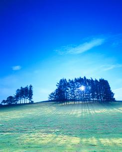 牧草地と木立と朝の木もれ日の写真素材 [FYI01510086]