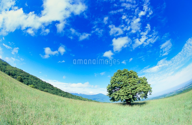 牧草地と木立の写真素材 [FYI01510111]