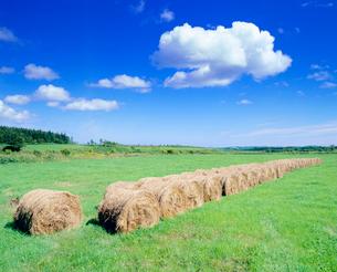 ロールの並ぶ牧草地の写真素材 [FYI01510142]