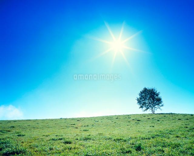 牧草地と木立と太陽の光芒の写真素材 [FYI01510159]