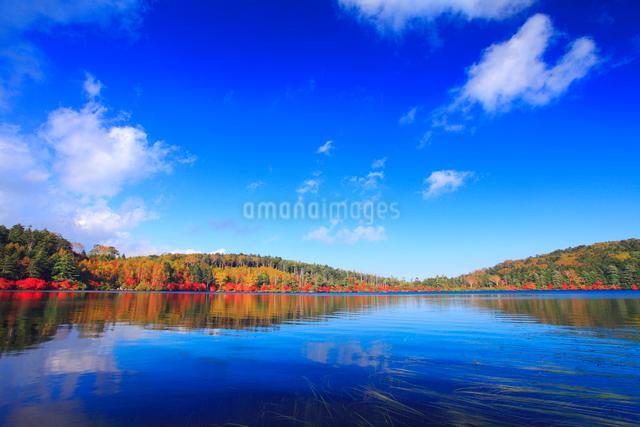 水鏡のドウダンツツジなどの紅葉の樹林の写真素材 [FYI01510183]