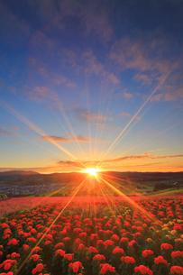 マリーゴールドとラベンダーの花畑と上富良野町俯瞰と夕日の写真素材 [FYI01510185]