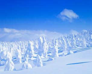 樹氷の樹林の写真素材 [FYI01510216]