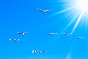 太陽の光芒とタンチョウヅルの写真素材 [FYI01510233]