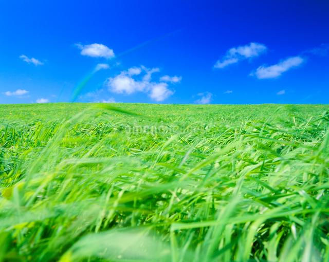 若草揺れる牧草地の丘の写真素材 [FYI01510249]