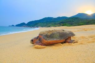 産卵後、海に帰るウミガメと朝日の写真素材 [FYI01510259]