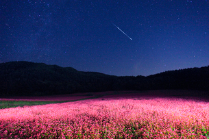 花咲く赤そば畑のライトアップと星空と流星の写真素材 [FYI01510290]